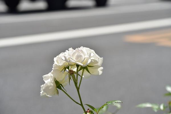 D81_5604.jpg